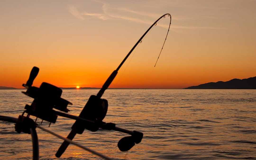 Four Things You Need for a Fishing Charter Website