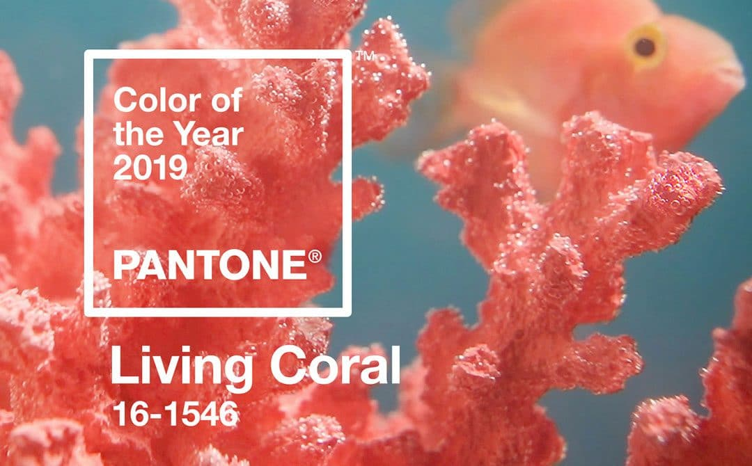Why Business Owners Should Consider Pantone's Colour of the Year